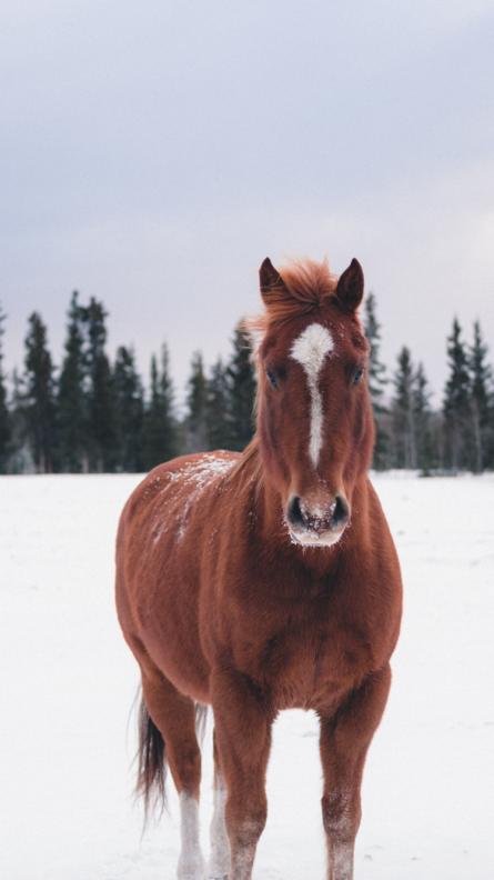 Mobile Horse – Mise en relation cavaliers et centres équestres